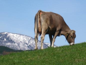 山・川・緑に囲まれた 大自然の中で牛たちと共に暮らしませんか? ★放牧酪農で独立を目指したい方や乳製品の加工にも興味のある方も大歓迎!