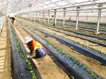 〚年間休日約104日〛◎正社員2名増員募集◎新鮮な野菜を新鮮なうちに!福岡の農業法人で安定して働きませんか?〚順調にランクアップしていける好環境です〛