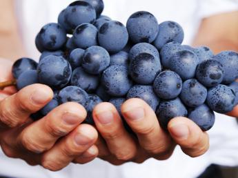 大手ワインメーカーのブドウ農園で、あなたの個性を表現してみませんか?★園芸経験者募集★【年間休日123日】