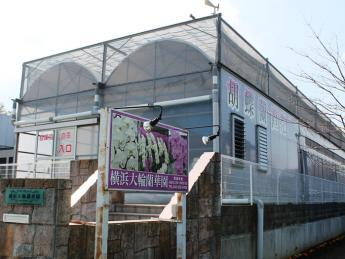 \パートさん募集/横浜市で唯一の胡蝶蘭専門ハウス!!『お客様に寄り添う』をモット―に贈答用の胡蝶蘭を生産しています!