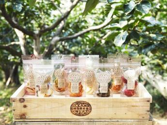 年末迄の短期アルバイター募集!! ●2週間以上~OK!● 古都奈良吉野は桜とフルーツの里! この上ないロケーションで収穫バイトをしませんか?【綺麗な寮あり】
