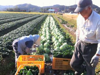 期間限定アルバイト募集 生活環境も農業環境も抜群! 千葉県木更津市で農業生活始めてみませんか?