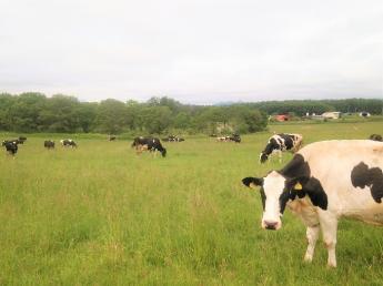 法人化し新しいステージが始まった当牧場で、酪農のお仕事を始めてみませんか?\未経験者歓迎・週休2日OK/
