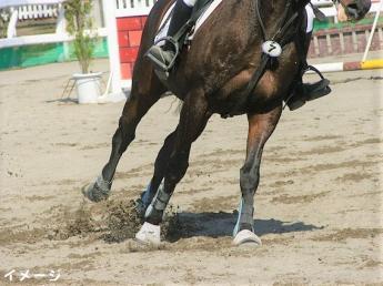 馬を愛でる気持ちと体力があれば、経験不問!競走馬育成牧場のお仕事です【寮完備・経験者優遇】