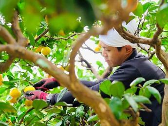11月~3月末頃まで期間限定☆彡 アルバイトのリピーターさんが多いみかん農園、伊藤農園で一緒に働きませんか?
