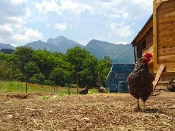 畜産をもっと身近に!!こだわりの平飼い放牧養鶏を本気で体験してみませんか?