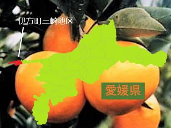 日本一細長い半島の先のかんきつ農園へようこそ!シェアハウスで仲間と共同生活(男女別)!かんきつの袋掛けや収穫・運搬作業を手伝ってください!