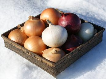 自然豊かな北海道置戸町(おけとちょう)でおいしい玉ねぎやジャガイモを栽培してみませんか?