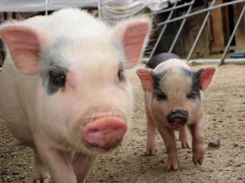 一つ一つの作業がお客様の笑顔につながる― 未経験の方大歓迎!一緒に「ブランド豚」を大切に育てませんか?