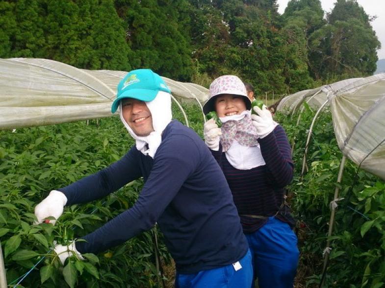 《研修生募集!》新規就農なら夏秋ピーマンがおすすめ!自然豊かな大分県臼杵市で、農業を始めよう!【研修寮あり】