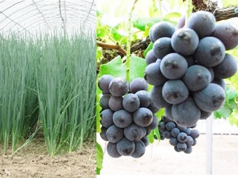 《研修生募集!》九州の北部にある大分県宇佐市で農業を始めませんか?【市独自の給付金あり】