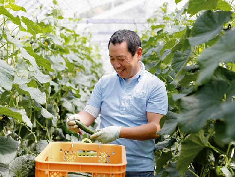 高知県は、恵まれた気候と、培ってきた高い技術力により、全国でもトップレベルの野菜の産地。 そんな高知県では、「産地の仲間をつくろう!」という思いを「産地提案書」にまとめて、農業をはじめる人を募集中!
