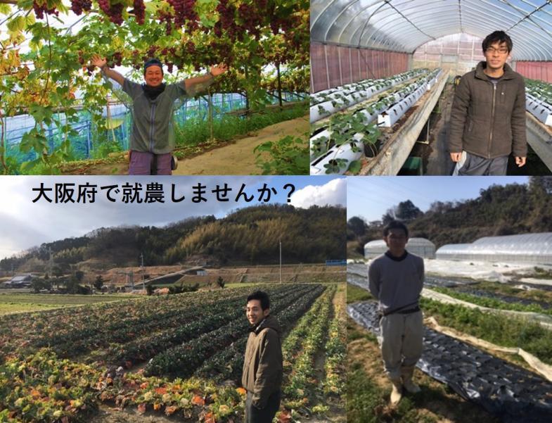 都市農業っておもろい!消費者との距離が近い大阪で就農しませんか?