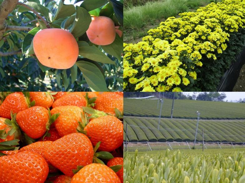 農業に挑戦しよう!奈良県が応援します!!京阪神の大消費地に隣接しながら豊かな自然の残る奈良県で就農しませんか!