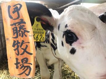 牛が大好き。動物が大好き。そんな代表と大切に育てられた牛の居る、あたたかい牧場です【正社員】【未経験者歓迎】