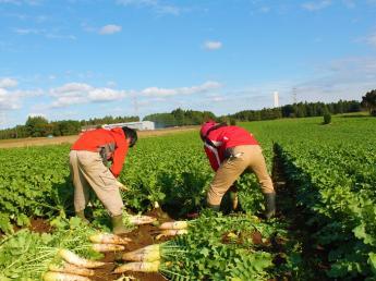 これからの農業を共につくっていく仲間大募集! GAP認証農場/大農園で農業をやってみたい方へ【正社員】