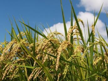 稲作メインか畑作メインか、あなたの意欲に応じてチャレンジできます! 法人化5年目!面積拡大中の農園で一緒に農業にチャレンジしませんか?