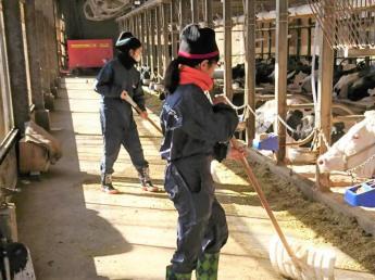 \都市近郊型酪農牧場/ やるべきことをきちんとやる! 基本に忠実に《良質な生乳》と《優秀な乳牛》をつくっています ◎未経験者歓迎◎