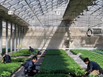 野菜の苗を大切に育てるお仕事です!力仕事のいらない農業アルバイトから、まずは始めてみませんか?