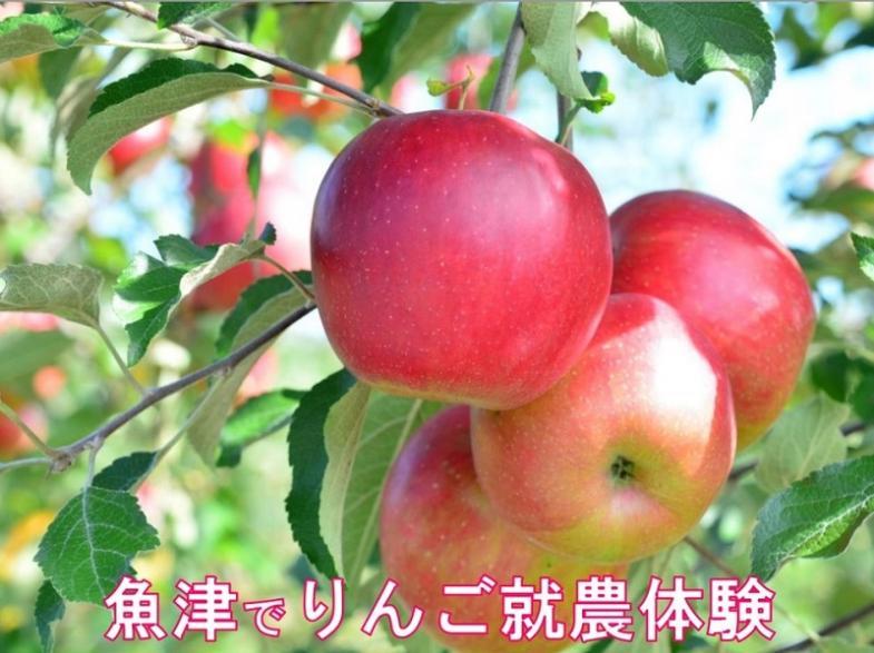 農業に興味がある方や、魚津で農業をやってみたい方!爽やかな香りのりんご収穫の体験から始めてみませんか!?
