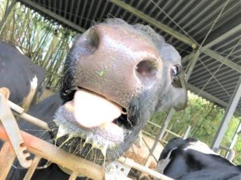 【【【緊急募集】】】スタッフ1名を急遽募集します アルバイトでも正社員でもOK!即日勤務開始できる方大歓迎★  \牛が牛らしく健康に生活できるように管理することを心掛けています/