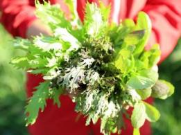 <span>株式会社グランドワンファーム</span>北海道 酪農