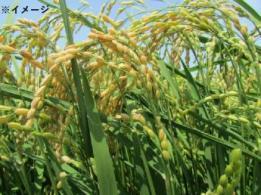 <span>株式会社サン・スマイリー農場</span>石川県 酪農業