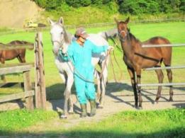 <span>有限会社 アカツキ牧場</span>愛知県 酪農
