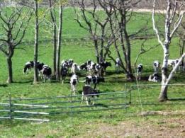 <span>株式会社 高尾牧場</span>熊本県 酪農