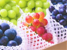 <span>産地間連携協議会~日本各地で農業バイトしませんか?~</span>北海道 野菜
