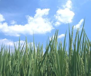 よりよい日本の農業のために